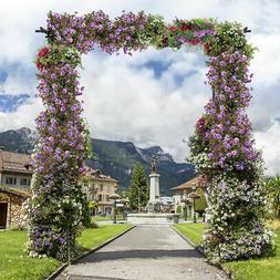 Garden Wedding Rose Arch Pergola Archway Flowers Climbing Pl